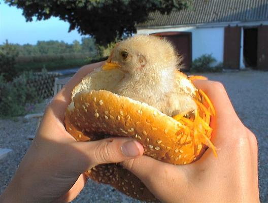 I think my Chicken Burger is a little under cooked!
